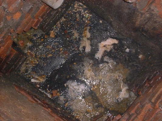 Reparatur von Abwasseranlagen